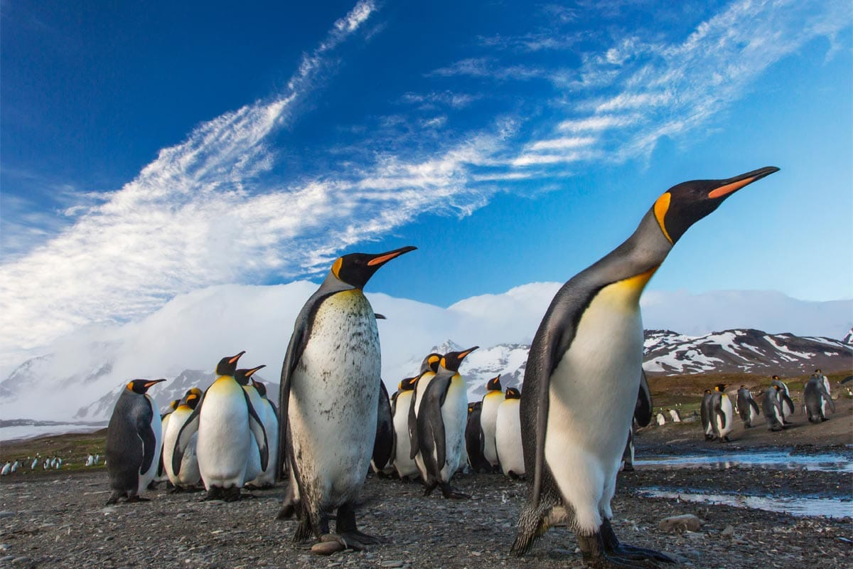 imperator-penguins-from-up-close