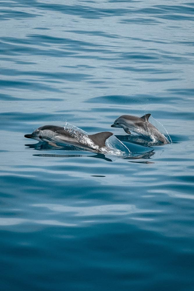 jumping-dolphins-in-the-ocean