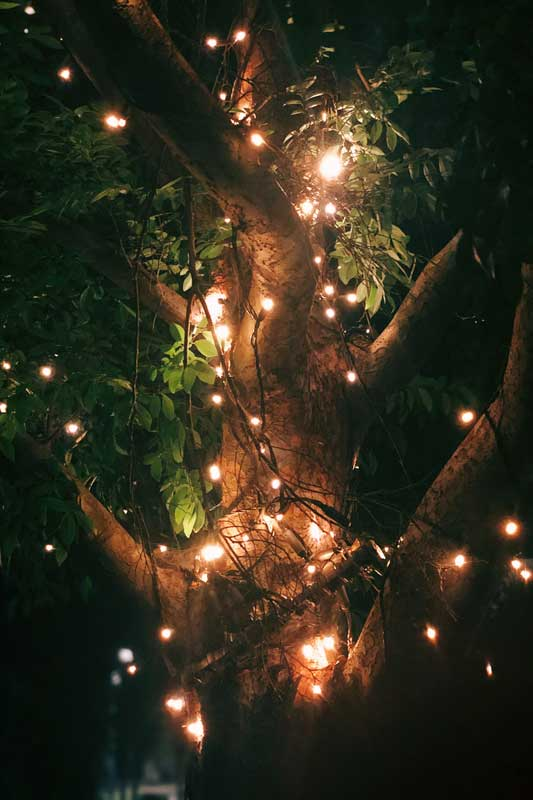 lighten-tree