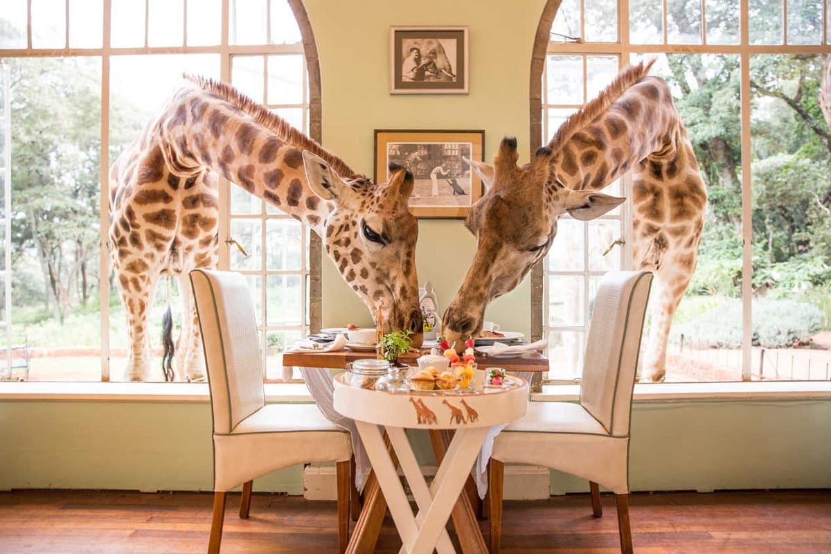 travel-bucket-list-giraffes in kenya