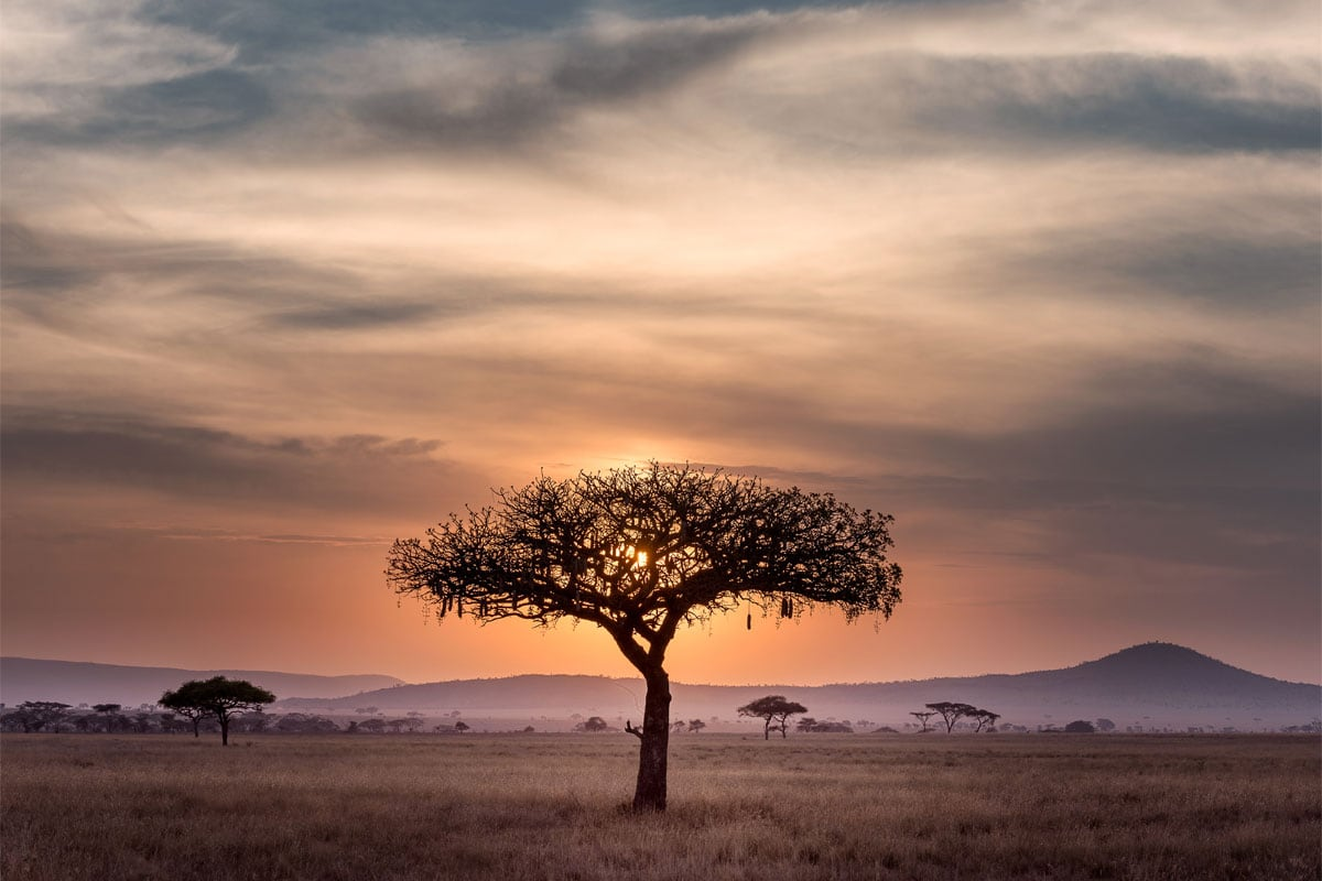 tree-in-the-african-savanha-at-sunset