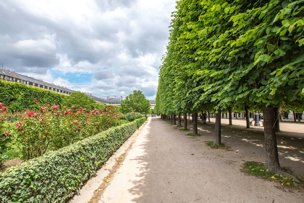 trees-in-a-paris-park