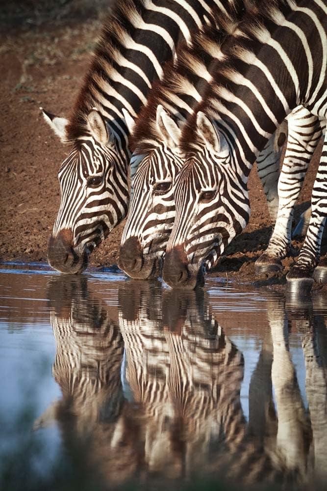 landmarks-in-africa-kruger-park