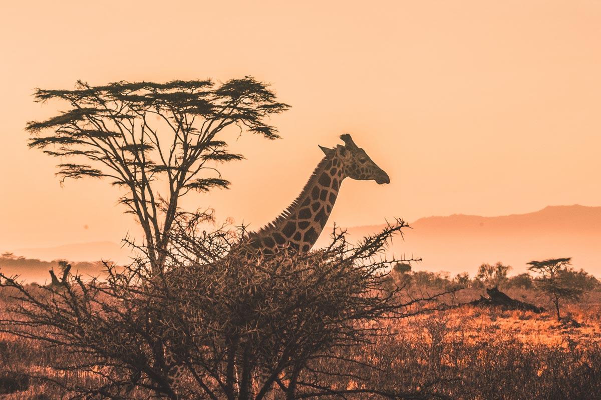landmarks-in-africa-serengeti