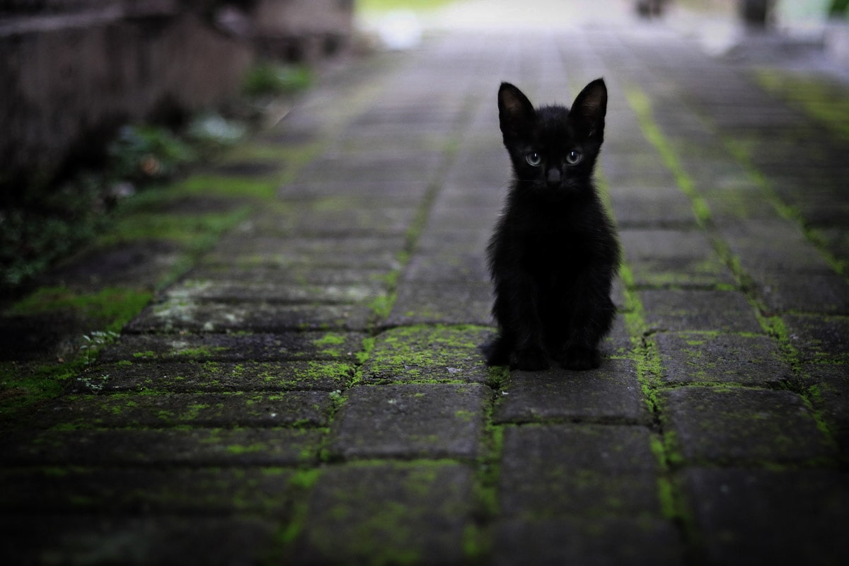 facts-about-italy-black-cat-sitting-on-the-pavement