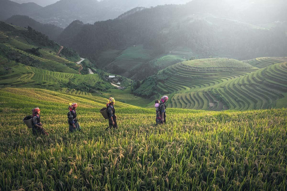 family-walking-through-sapa-rice-terraces