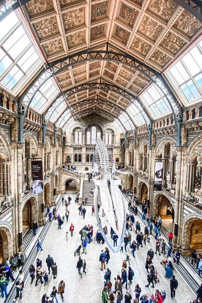 what-is-london-known-for-interior-of-the-natural-history-museum-with-a-giant-whale-skeleton-in-the-middle