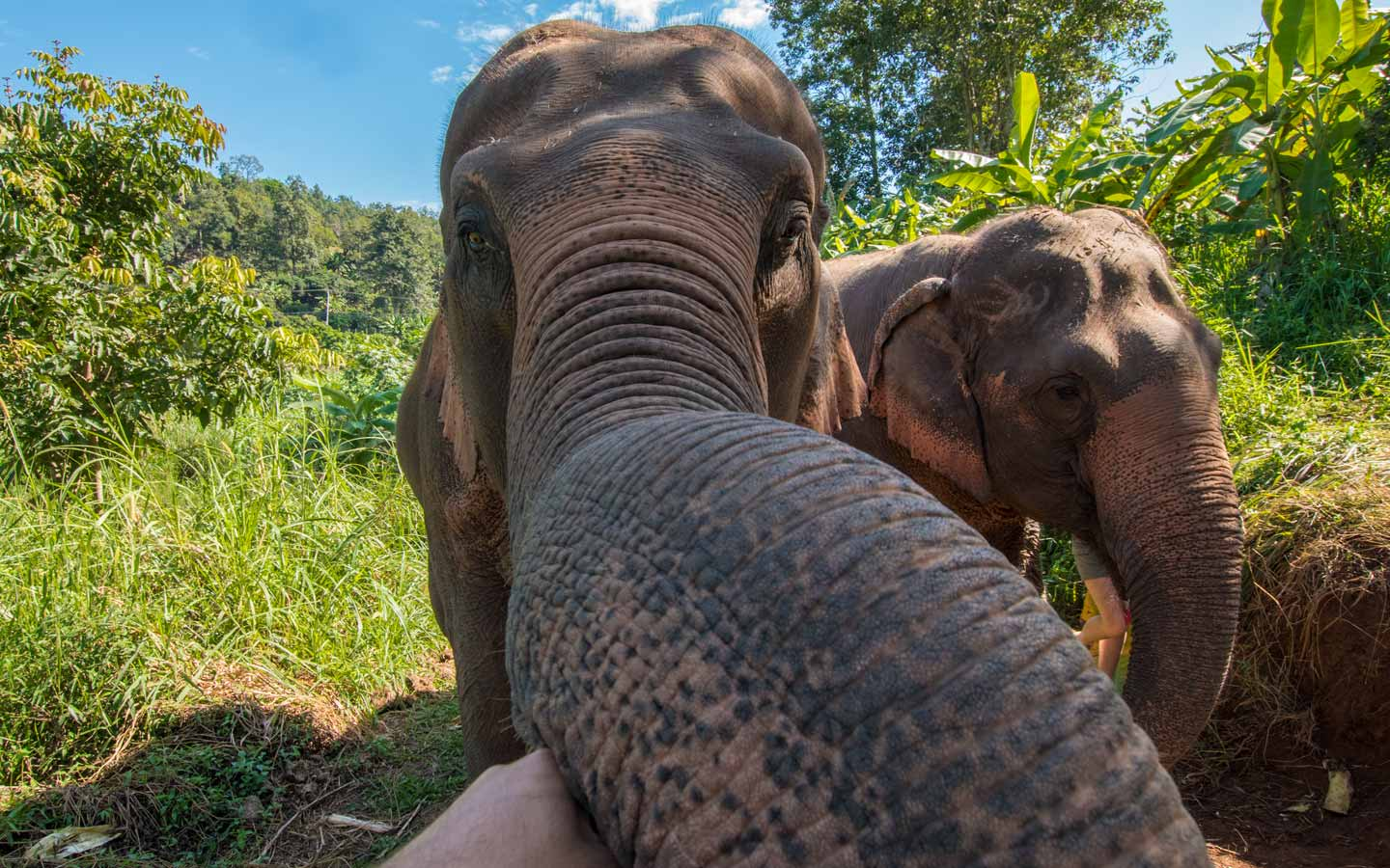 elephant-friend-in-chiang-mai