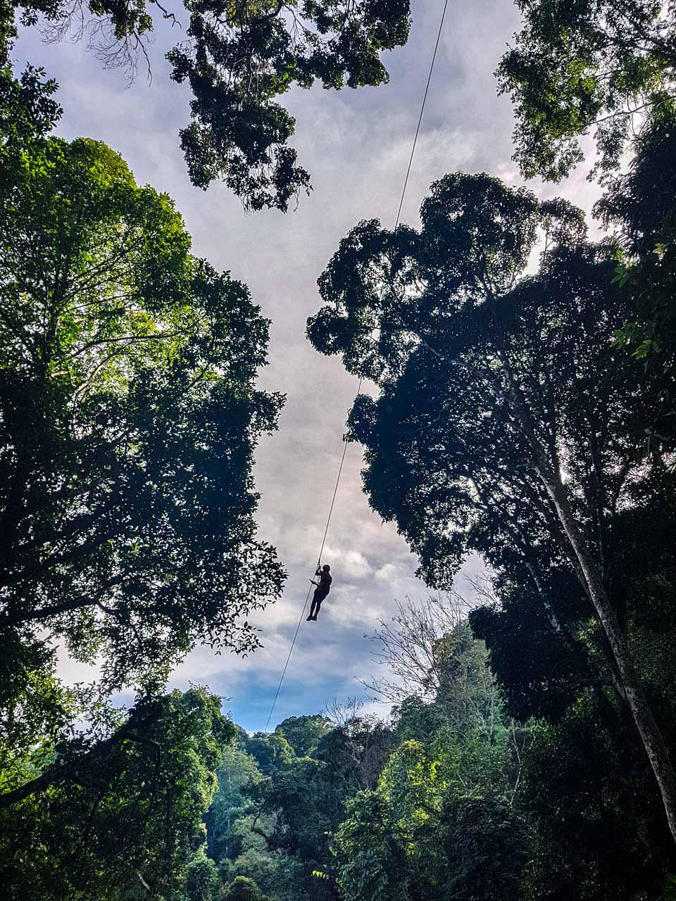 jungle-paradise