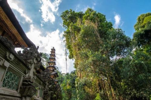 bali-photos---jungle-walk