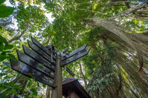 bali-photos---monkey-forest