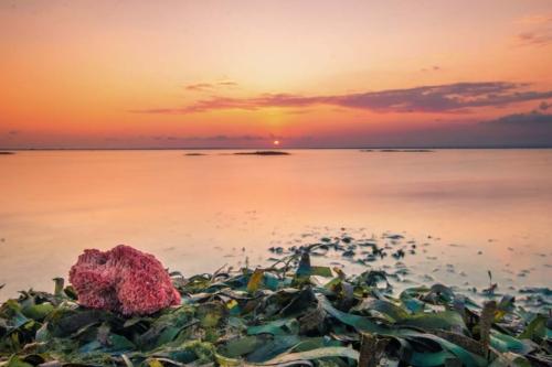 bali-photos---sunset-beach-coral