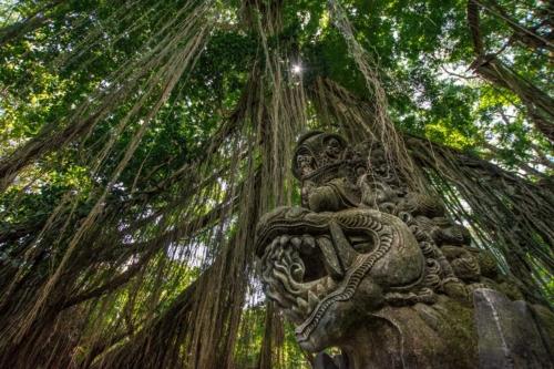 bali-photos---ubud-jungle